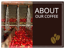 About Our Coffee